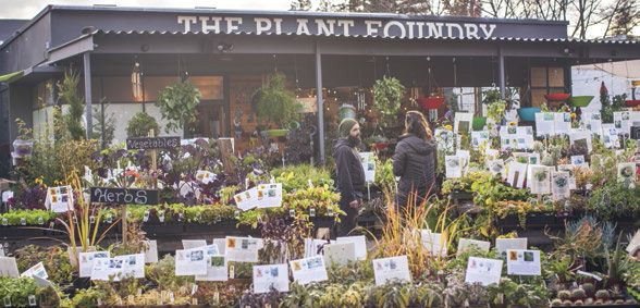The Plant Foundry